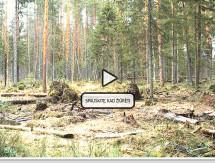 Meškų šėryklos kamera 2014m. (Tiesioginė transliacija)