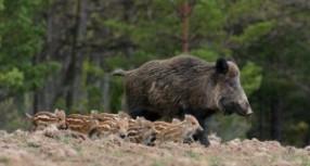Medžioklė Lietuvoje