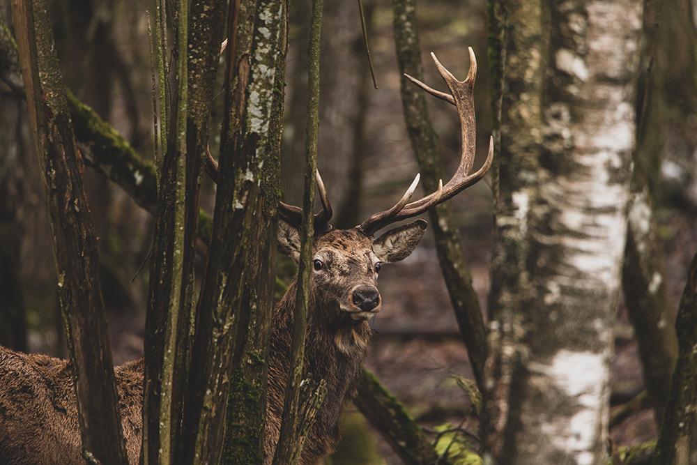 Medžiotojai – prieš medžioklės demonizavimą ir kviečia diskusijai